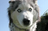 Apteczka pierwszej pomocy dla psa