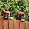 Obroże elektryczne dla psów Dogtra