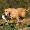 Elektroniczna obroża dla psa EasyPet