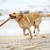 obroże elektryczne dla psów Petainer