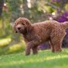 Obroże elektryczne dla psów PetSafe