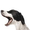 Obroże elektryczne dla psów SportDOG
