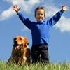 obroże elektryczne dla psów ZooTop