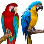 Produkty dla ptaków